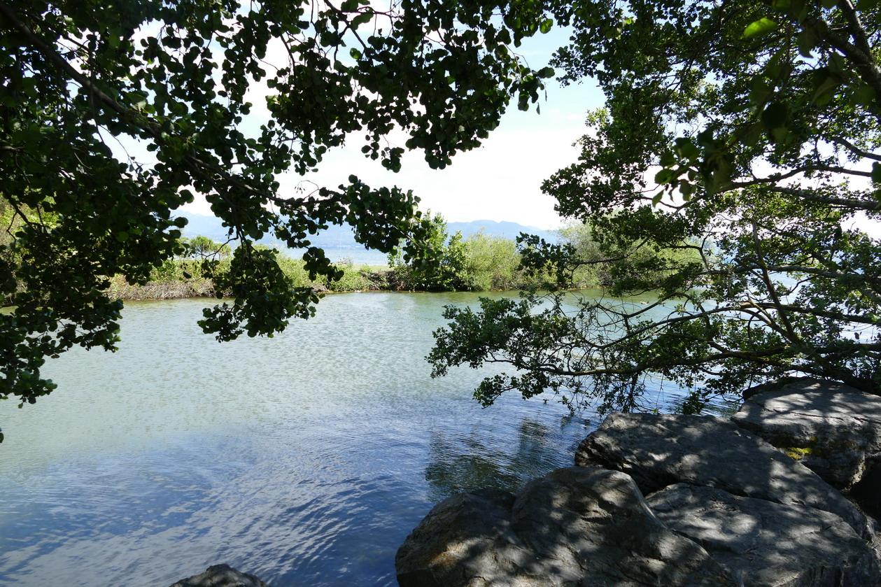 46. Lac Léman - Rolle et le vignoble suisse