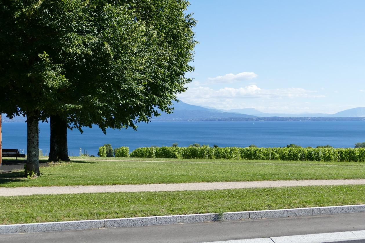 49. Lac Léman - Rolle et le vignoble suisse