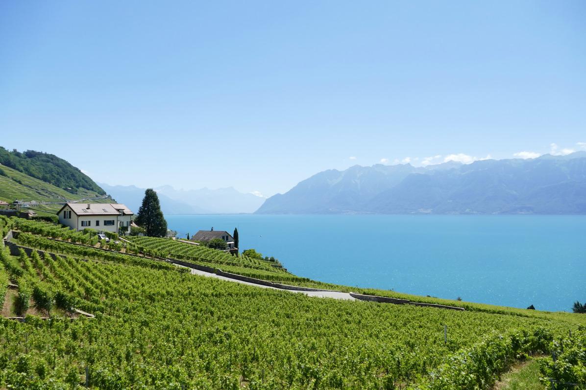 53. Lac Léman - Rolle et le vignoble suisse