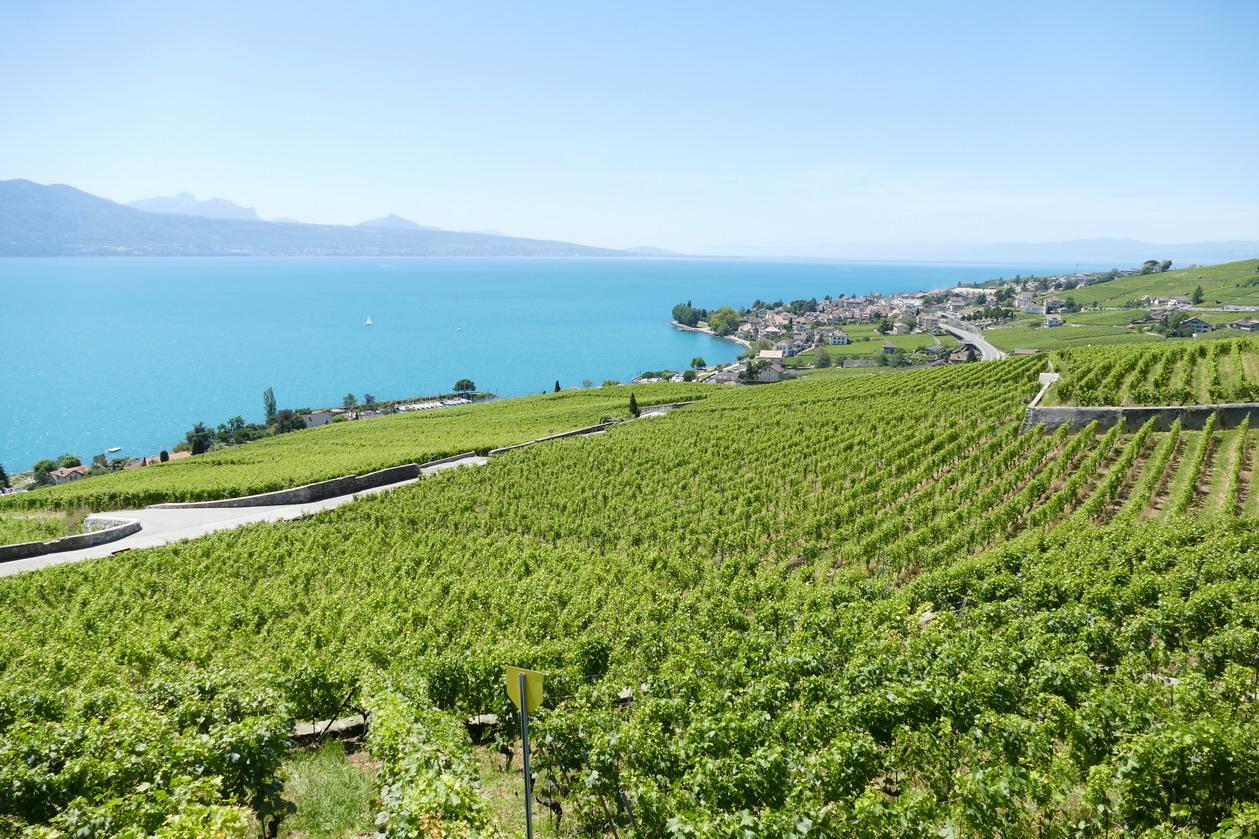 54. Lac Léman - Rolle et le vignoble suisse