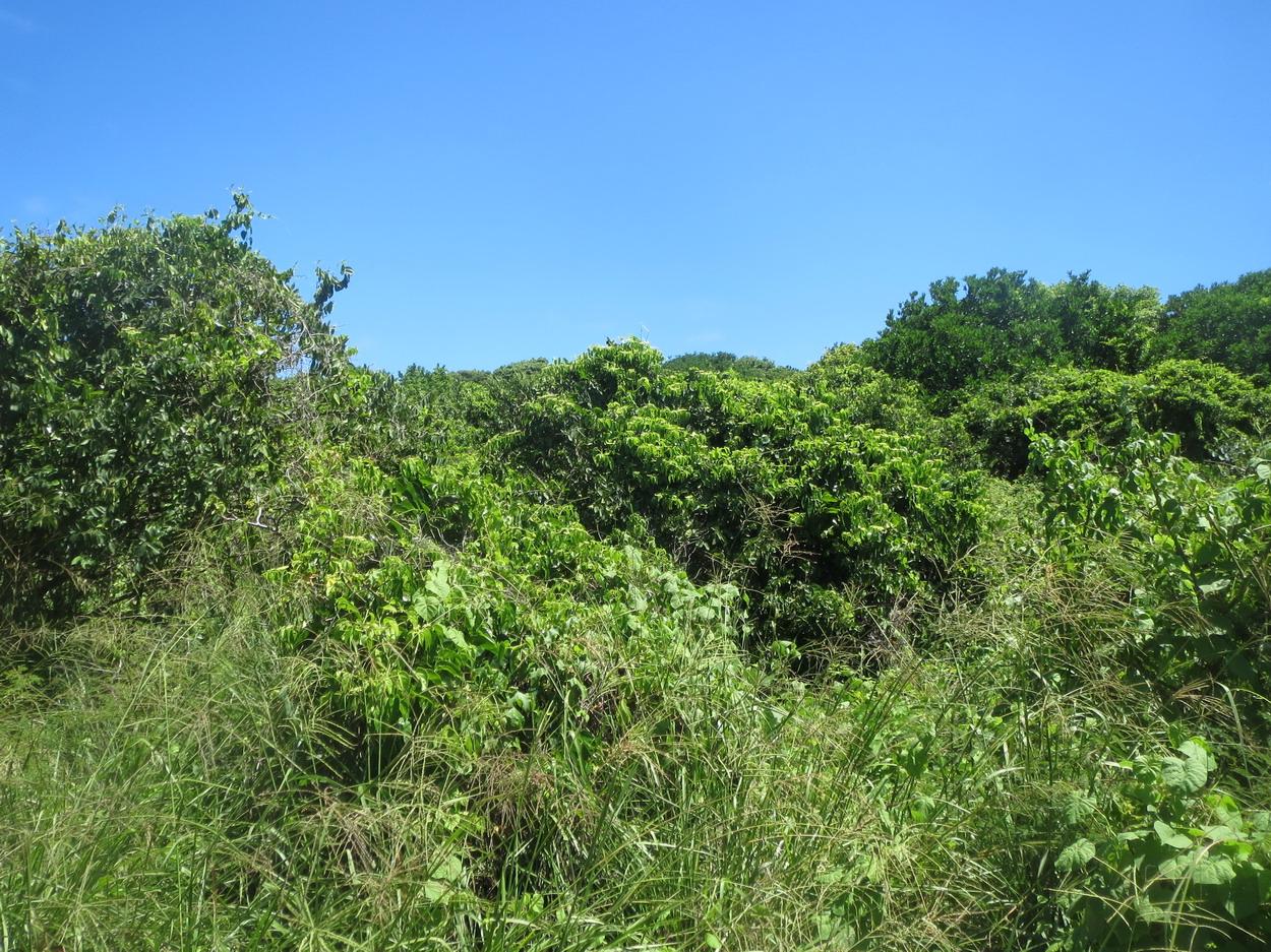 8. C'est tout vert, il pleut souvent à proximité de l'équateur